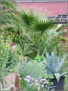 Léto na zahradě DSCF0953