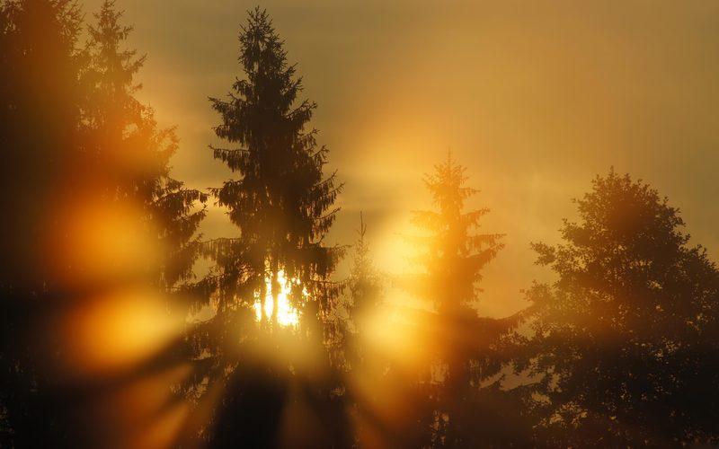 Fotografija dana - Page 3 Forest_golden_fog
