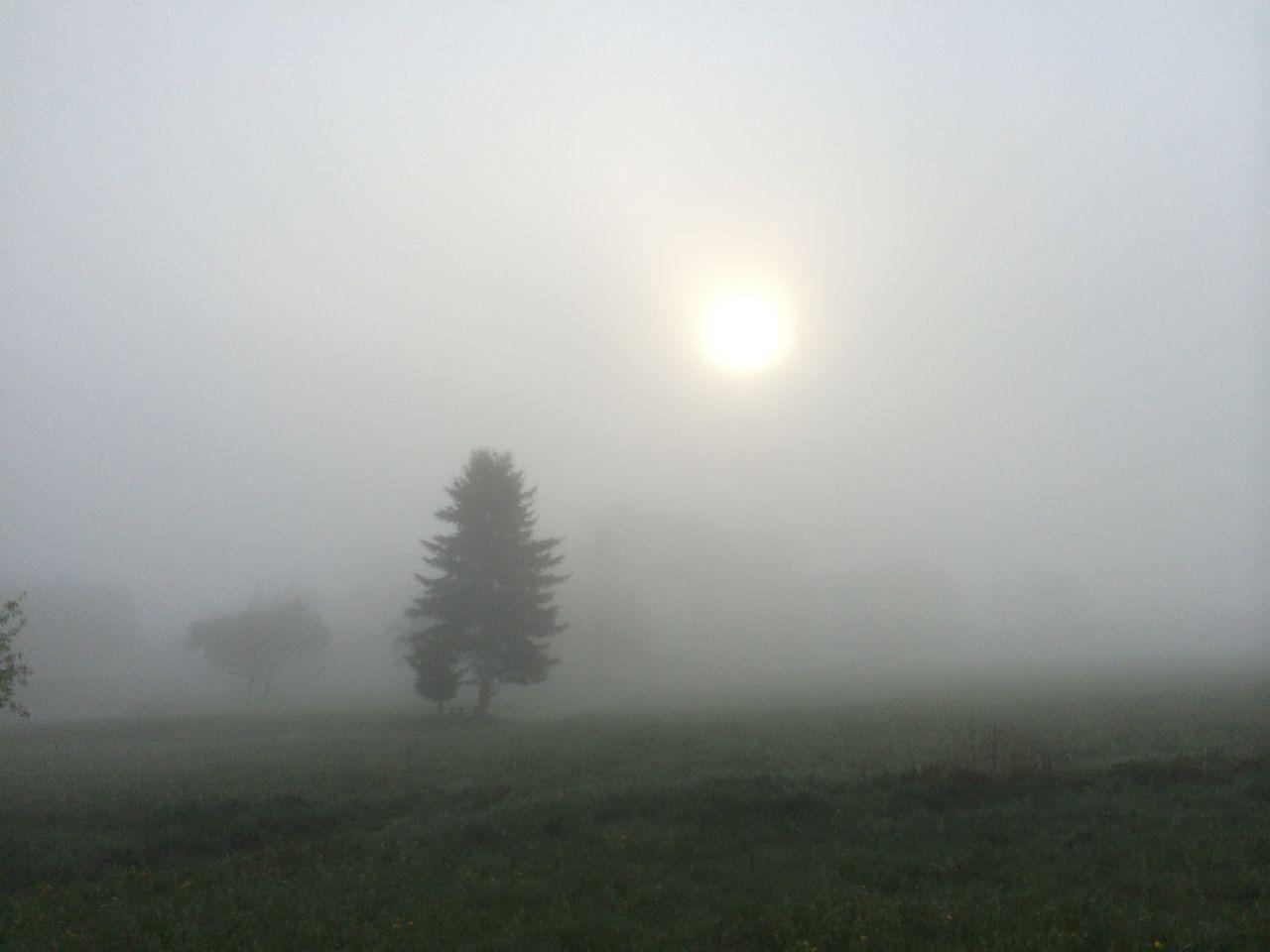 Sonnenbilder IMG_1280