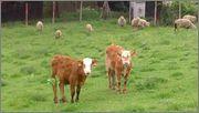 Naši zvířecí pomocníci - Stránka 2 DSC_0389