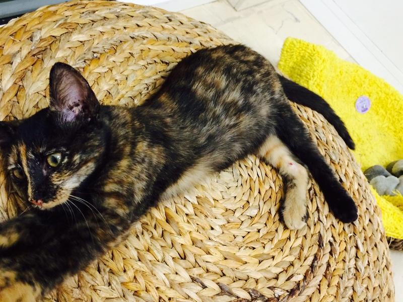 Χαρίζονται γατάκια, η Σίλβερ και η Μερέντα Merenda_3