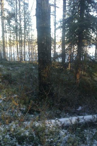 Зимний пейзаж IMAG0640