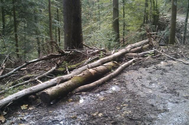 Listopadne šume IMAG1110