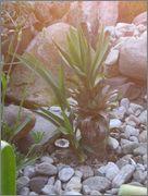 Mrazuodolné juky - rod Yucca - Stránka 2 IMG_2057