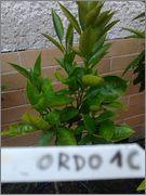 Pomerančovníky - Citrus sinensis - Stránka 2 2014_07_19_19_39_19