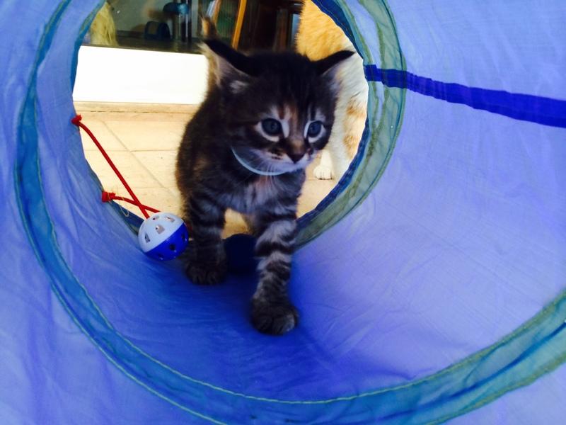 Κάρι, μια υπέροχη γατούλα και τα 4 μωράκια της - Σελίδα 3 Foibi_4
