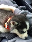 Oakley's puppy scrapbook! Photo_Dec_20_12_10_38_PM