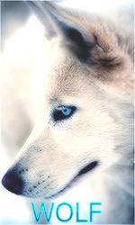 [CREAŢII] tEquiLa128 Avatar_wolf