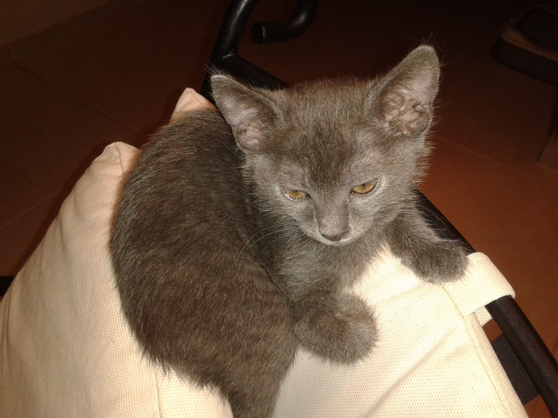 3 γατάκια, 2 μηνών 20140821_225549