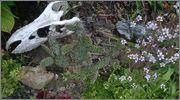 mrazuodolné opuncie - rod Opuntia - Stránka 3 WP_20140604_004