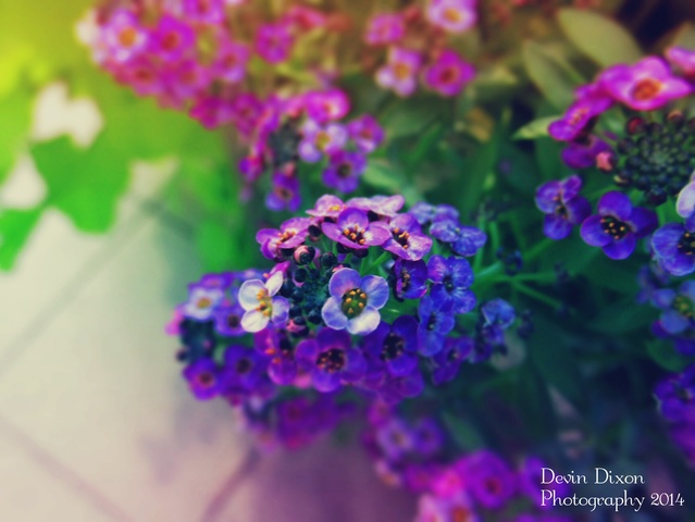 Devin's Photography. Vivid_Purple