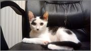 Χαρίζεται άμεσα πανέμορφο γατάκι (αγόρι) στη Θεσσαλονίκη 10549037_10204230966075928_6168305330625028541_o