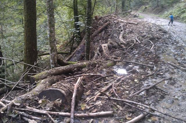 Listopadne šume IMAG1111