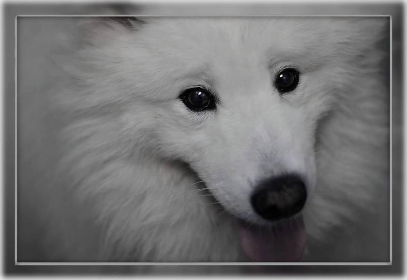 Zlata pravila pri šolanju psov 10446242_962042557143111_4446588954827630918_o
