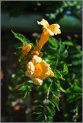 Léto na zahradě - Stránka 2 DSC_0006