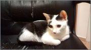 Χαρίζεται άμεσα πανέμορφο γατάκι (αγόρι) στη Θεσσαλονίκη 10553720_10204230966115929_4596995358690203148_o