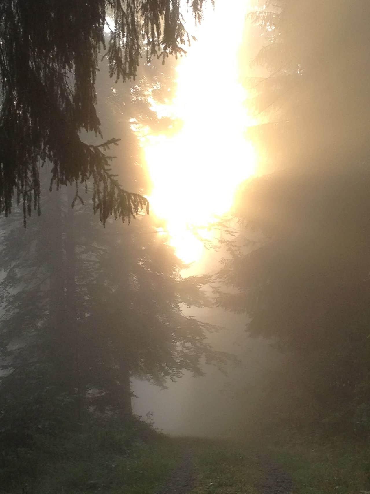 Sonnenbilder IMG_2709