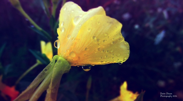 Devin's Photography. Wet_Yellow