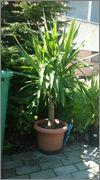 Určení druhu rostliny - Stránka 3 WP_20140822_007
