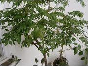 Určení druhu rostliny P6100856
