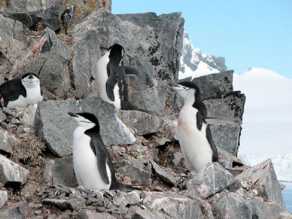 Pingvini - Page 3 36gpitllmup