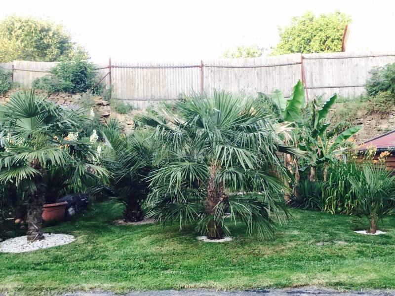 Léto na zahradě - Stránka 3 Floridsky_koutek_2016