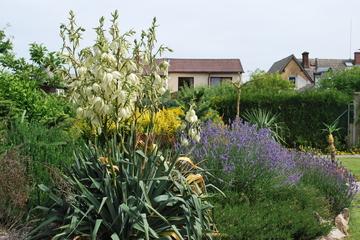 Léto na zahradě - Stránka 3 DSC_0164
