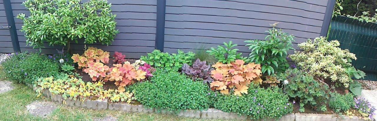 Quelques plantouilles aujourd'hui... Image
