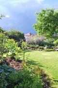 Léto na zahradě - Stránka 3 DSC_0089