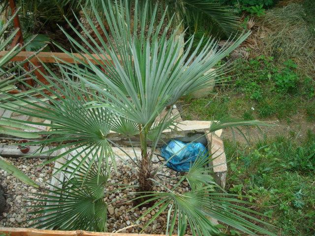 Léto na zahradě - Stránka 2 DSC00742