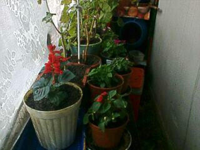 Flori si gradini - Pagina 30 1435515358236