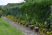 Léto na zahradě - Stránka 3 DSC_0211