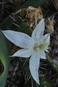 mrazuodolné opuncie - rod Opuntia - Stránka 3 DSC_0195