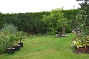 Léto na zahradě - Stránka 3 DSC_0214