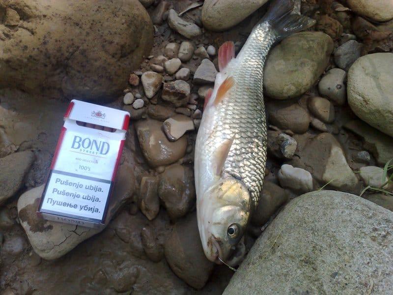 Lov i ribolov !!! 30072016187