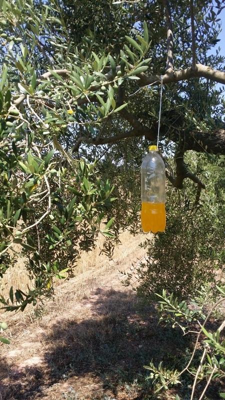 Trampas para mosca del olivo 2dglrx3