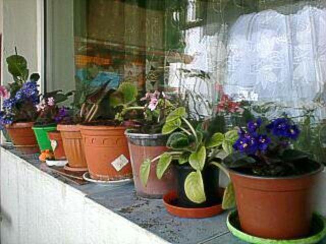 Flori si gradini - Pagina 30 1435515357742