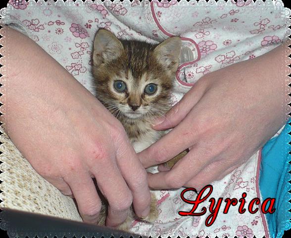 Lyrica gatita de 1,5 meses en adopción urgente-Sevilla BIuqv0_I