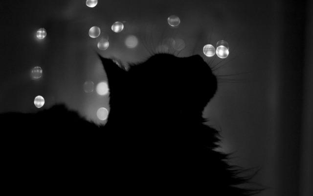 Les silences ne font pas tous le même bruit. 6903407_black_cat_wallpaper