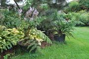 Léto na zahradě - Stránka 3 DSC_0218