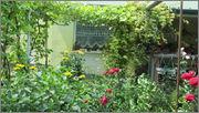 Flori si gradini - Pagina 31 IMG_1323
