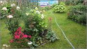 Flori si gradini - Pagina 31 IMG_1390