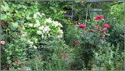 Flori si gradini - Pagina 31 IMG_1310
