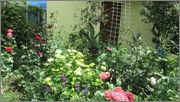 Flori si gradini - Pagina 31 IMG_1331