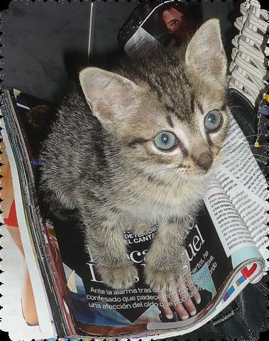 Dean gatito de 2 meses busca hogar-Sevilla 6_O9u_Eqg