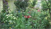 Flori si gradini - Pagina 31 IMG_1366
