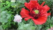 Flori si gradini - Pagina 31 IMG_1360