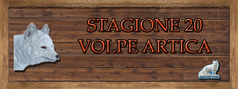 Volpe Artica - ST. 20 VOLPE_ARTICA