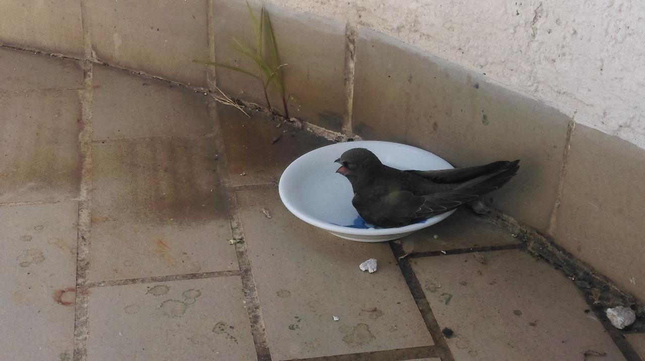 Nađena divlja ptica na balkonu 373041_3424_n