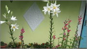 Flori si gradini - Pagina 31 IMG_1387